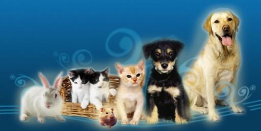todos_mascotas2