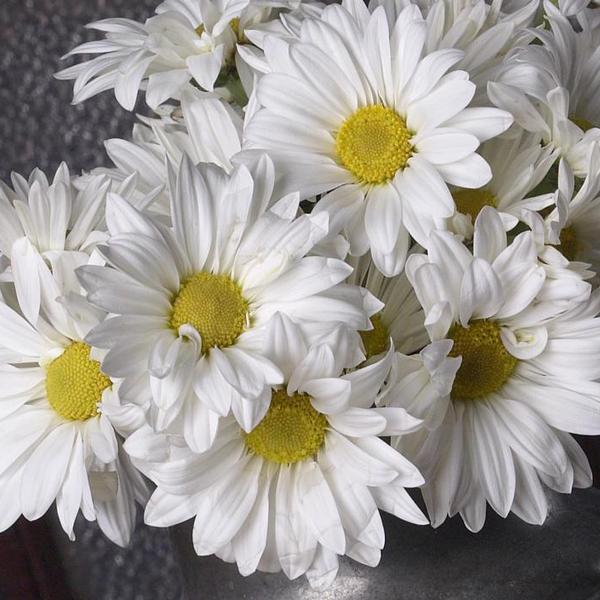 Conoce El Significado De Algunas Flores Para Que Las Regales En Vida