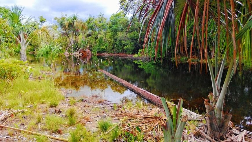 especies protegidas en colombia