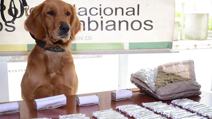Marihuana incautada con ayuda de canino en La Mansión. Foto: Policía Metropolitana