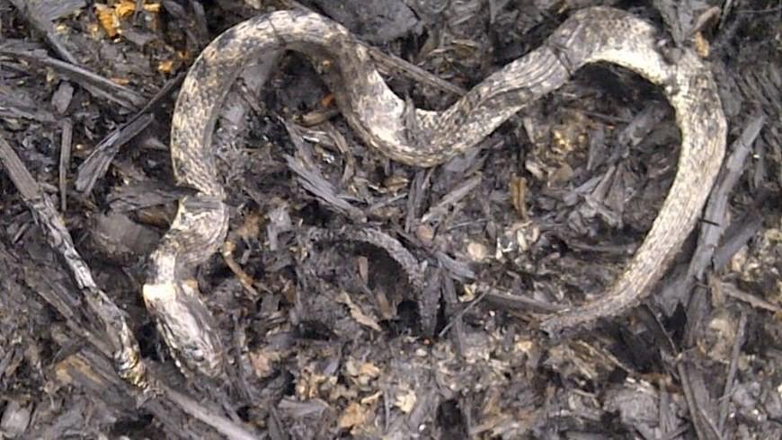 328 especies de fauna silvestre fueron afectadas. Foto: Gobernación de Antioquia.