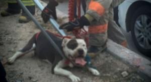 Foto de uno de los canes. Cortesía eldebate.mx
