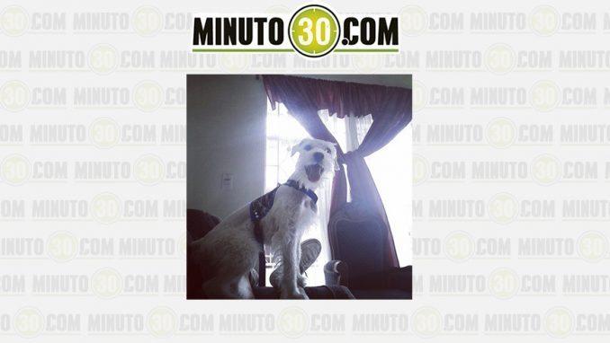"""Banca Oriental Telefono:Minuto30com – """"Lucas"""" desapareció del barrio Manrique Oriental"""