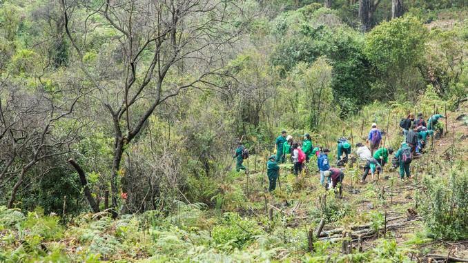 Avistan pavas andinas en los Cerros Orientales de Bogotá