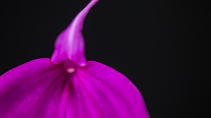 Orquídea/ Cortesía Jardín Botánico de Bogotá