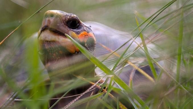 Los reptiles más amenazados de Colombia, ¡conózcalos!