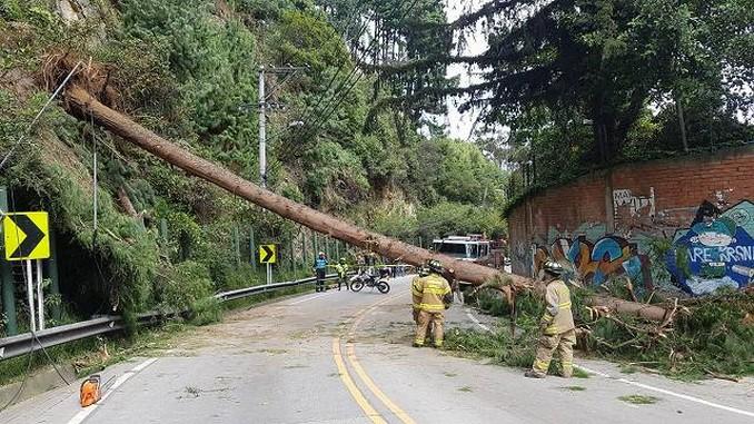 Durante invierno se caen en promedio cuatro árboles diarios en Bogotá