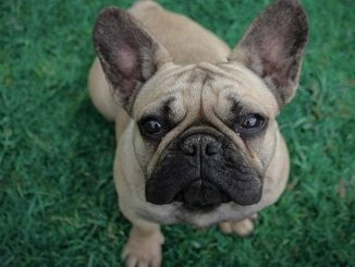 Bogotá estrena su segundo parque para perros