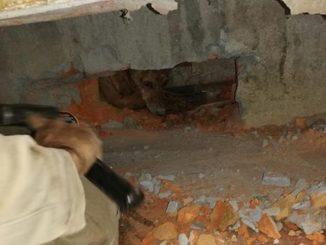 Así fue el rescate de 'Rambo', un perrito que quedó atrapado entre dos edificaciones en el Meta