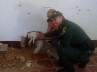 Rescataron a gatico que quedó atrapado entre dos paredes en Norte de Santander