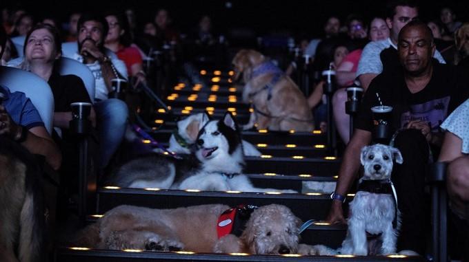 Image result for brasil preestreno pelicula perros