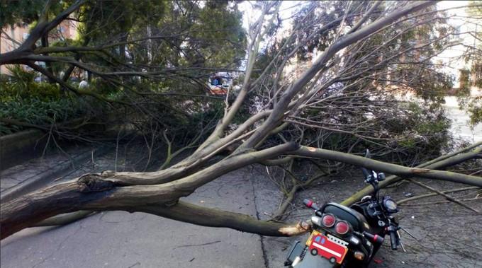 Arbol colapsado en Bogota Copiar