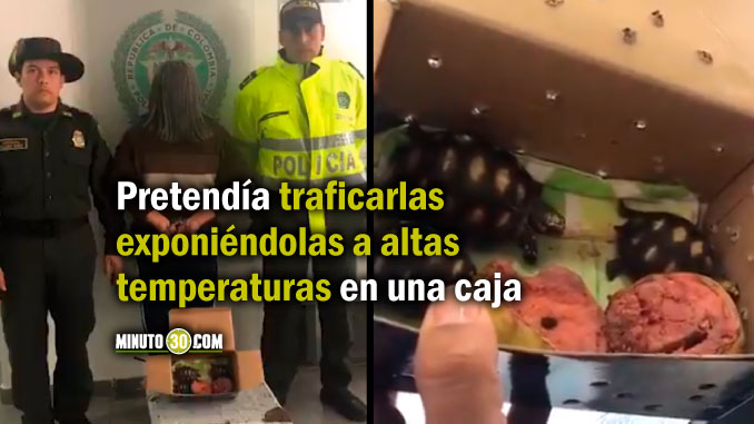 Intento traficar tortugas en Colombia