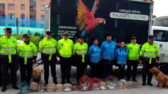 Operativo contra el trafico de fauna en Bogota 2