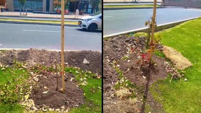 Arboles valdalizados en Bogota