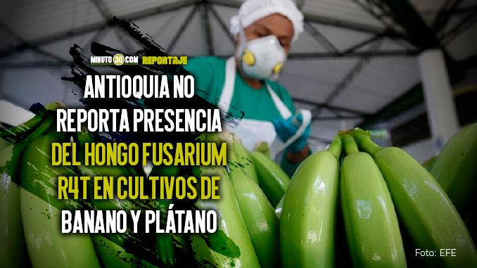 Con un Puesto de Mando Unificado Antioquia previene que el hongo del banano llegue al departamento