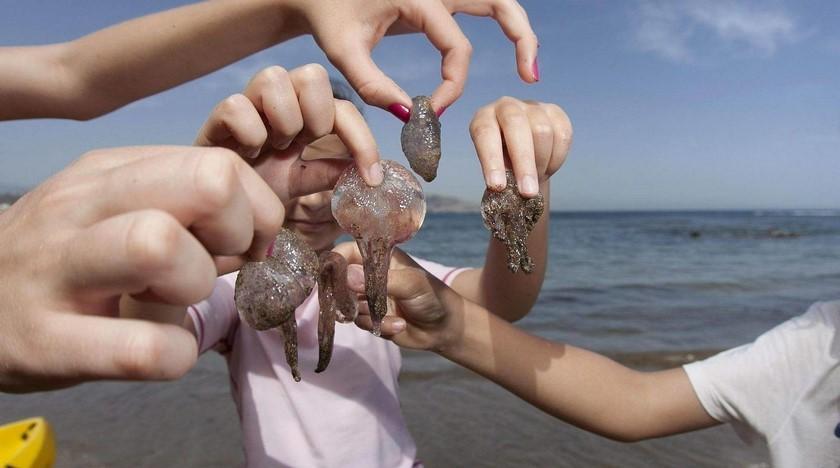 Ojo Que No Te Pique La Agua Mala Reportan Presencia De Medusas Tóxicas En Playas De Santa Marta Minuto30 Com