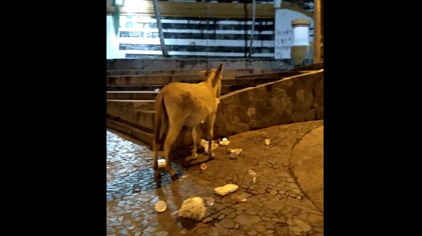 denuncia ciudadana de basuras en yarumal