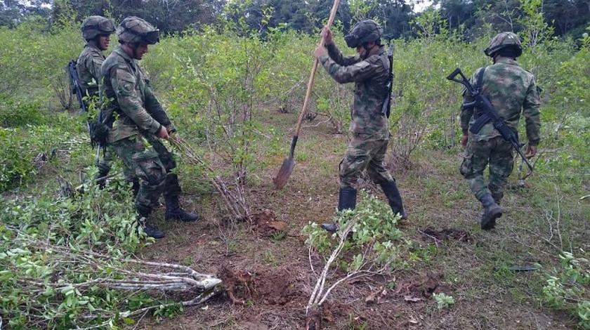 Erradicacion cultivos ilicitos matas de coca Colombia Ejercito