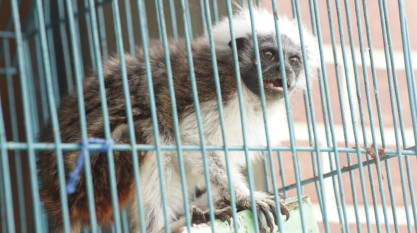 Fauna incautada en Bogota