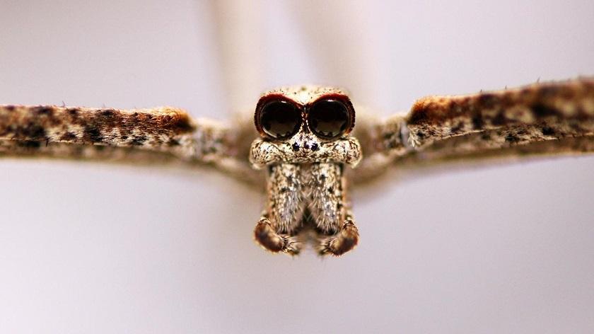 """Las arañas pueden """"oír"""", al menos a dos metros de distancia"""