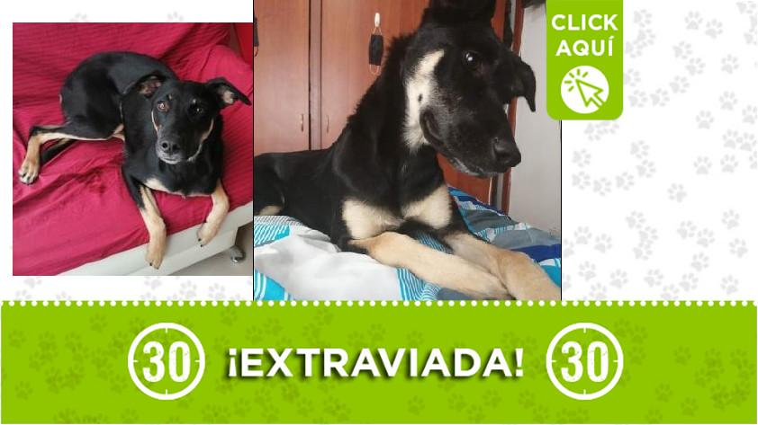 'Estrellita' perdida en Villavicencio