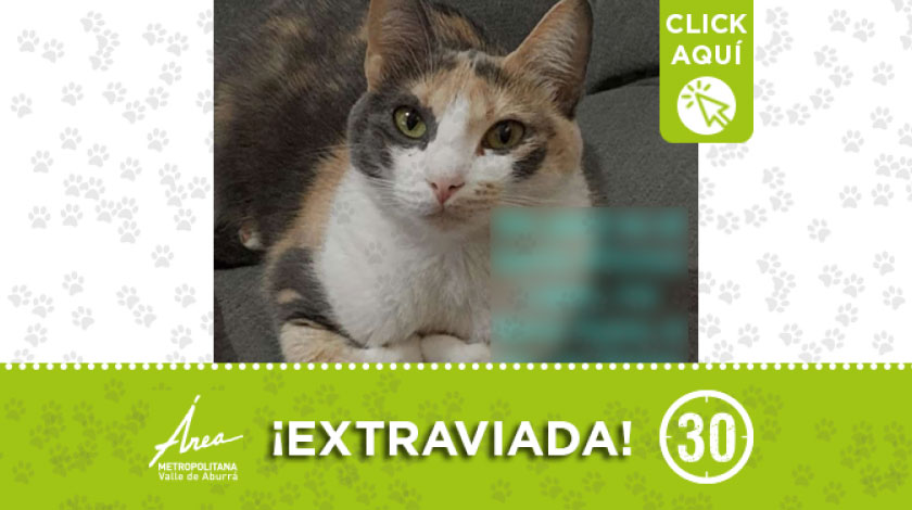 'Kyara' se extravió en el barrio Alfonso López de Medellín, ¿la ha visto?