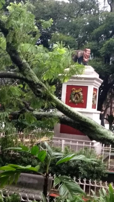 arbol cayo parque de Copacabana1
