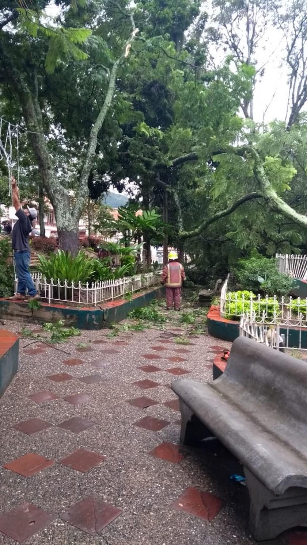 arbol cayo parque de Copacabana5