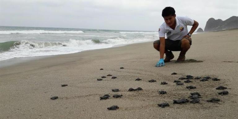 tortugas ecuador