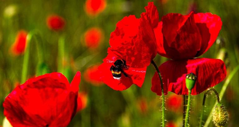 La temporada de alergias al polen empeora, en parte, por el cambio climático