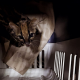 Rescatan a tigrilla lanuda en zona industrial del municipio de Itagüí