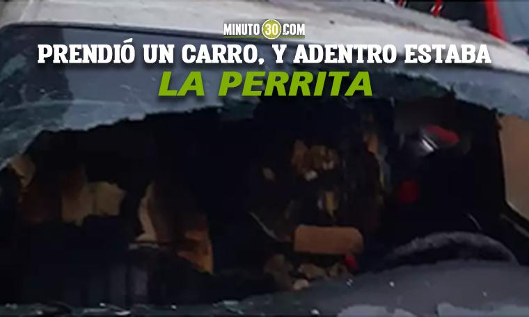 ¡Animal Hombre al parecer despedido por llegar borracho al trabajo quemo a una perrita en Bogota