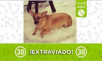 Aranjuez perro