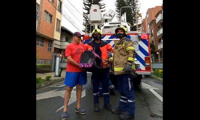 ¡Qué ternura! Bomberos de Medellín rescataron una gatico que estaba atrapado en la parte alta de un árbol